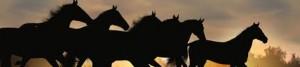 black horse wide