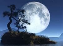 full moon w tree