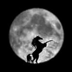 horse full moon