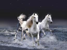 whitehorses