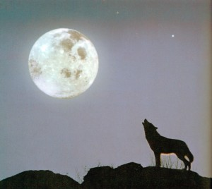 wolf howling at full moon57