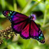 beuatiful butterflyjpg