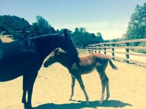 baby horse at ranch