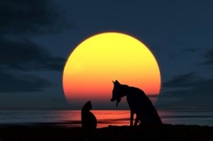 full moon cat and dog