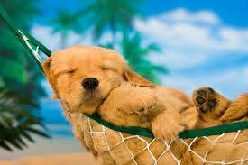 puppy hamack