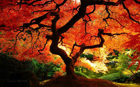 fall tree 2