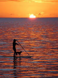 dog paddle board