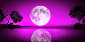 fushia full moon